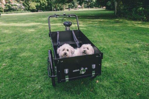 Ladcykle til hund